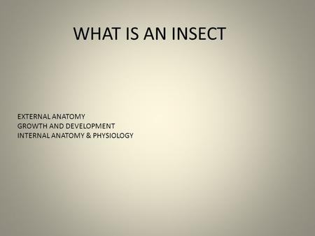 WHAT IS AN INSECT EXTERNAL ANATOMY GROWTH AND DEVELOPMENT INTERNAL ANATOMY & PHYSIOLOGY.