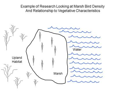 Example of Research Looking at Marsh Bird Density And Relationship to Vegetative Characteristics Upland Habitat Water Marsh.
