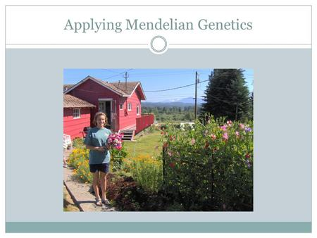 Applying Mendelian Genetics. Meiosis Review by reading pages 84 – 87 and 265 - 271.