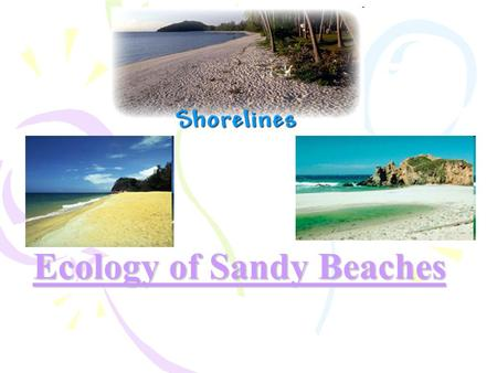 Ecology of Sandy Beaches