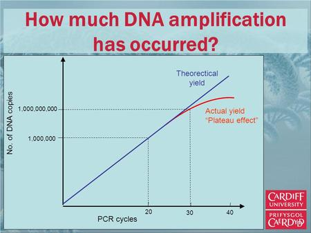 "1,000,000 1,000,000,000 PCR cycles 20 40 30 Theorectical yield Actual yield ""Plateau effect"" No. of DNA copies How much DNA amplification has occurred?"