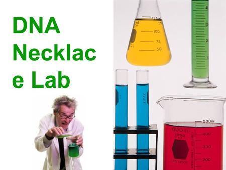 DNA Necklac e Lab. Materials clear sports drink or 0.9% salt water Dixie cup Sharpie marker 15 mL disposable test tube test tube rack microcentrifuge.