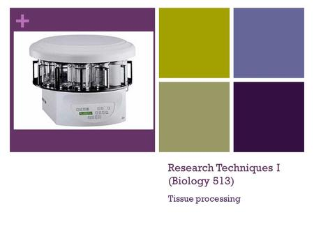+ Research Techniques I (Biology 513) Tissue processing.