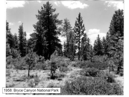 1958: Bryce Canyon National Park. 1970 1991 Vegetation dynamics Also known as plant succession –Sequence of compositional and structural vegetation.