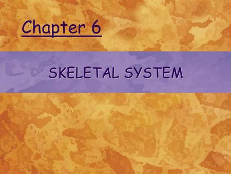 SKELETAL SYSTEM Chapter 6. © 2004 Delmar Learning, a Division of Thomson Learning, Inc.2 FUNCTIONS Supports body structure and provides shape to the body.