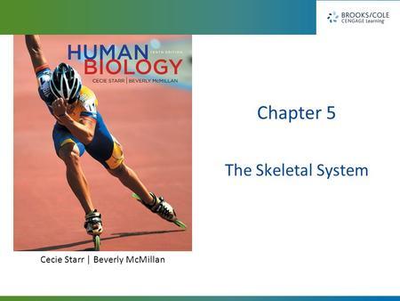 System Chapter 5. Long-Bone Structure Compact bone Spongy bone ...