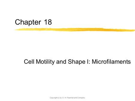 Copyright (c) by W. H. Freeman and Company Chapter 18 Cell Motility and Shape I: Microfilaments.