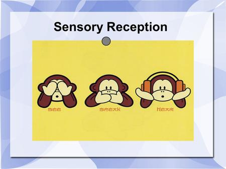 Sensory Reception. How you sense. Sensory Receptors – nerve endings that gather sensory information Sensation – when neural impulses arrive at cerebral.