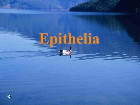 Epithelia. 1.Cell: the basic structure of human cell 2.Tissue: consists of cells and intercellular substance 3.Organ: consists of different tissues which.
