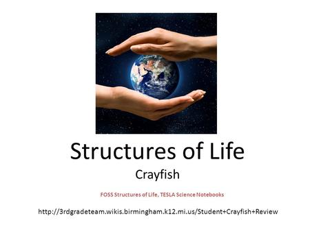Structures of Life Crayfish FOSS Structures of Life, TESLA Science Notebooks