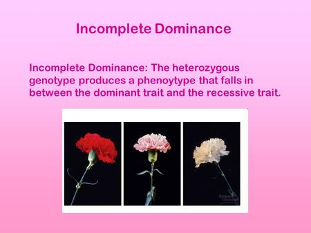 Incomplete Dominance Incomplete Dominance: The heterozygous genotype produces a phenoytype that falls in between the dominant trait and the recessive trait.