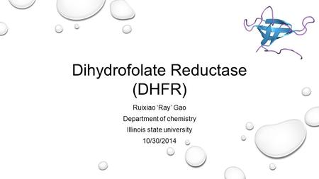 Dihydrofolate Reductase (DHFR) Ruixiao 'Ray' Gao Department of chemistry Illinois state university 10/30/2014.