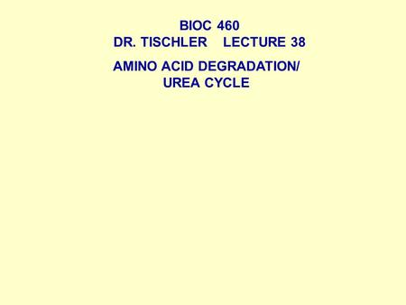 BIOC 460 DR. TISCHLER LECTURE 38 AMINO ACID DEGRADATION/ UREA CYCLE.