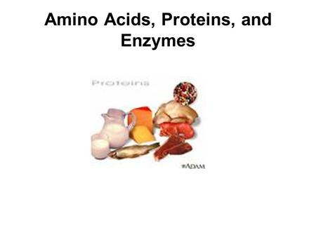 Amino Acids, Proteins, and Enzymes. Functions of Proteins Proteins perform many different functions in the body.