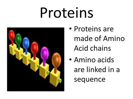 Proteins Proteins are made of Amino Acid chains