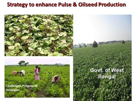 Strategy to enhance Pulse & Oilseed Production Challenges, Progress & Strategies Govt. of West Bengal.