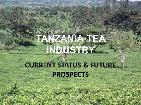 TANZANIA TEA INDUSTRY CURRENT STATUS & FUTURE PROSPECTS.
