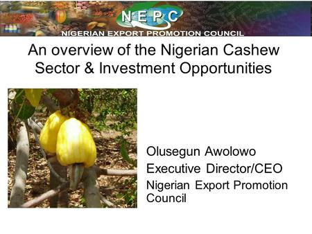 An overview of the Nigerian Cashew Sector & Investment Opportunities