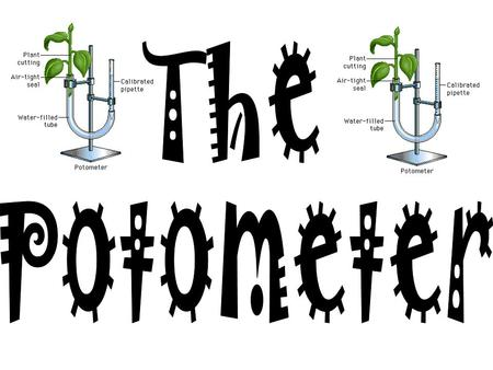 The Potometer.
