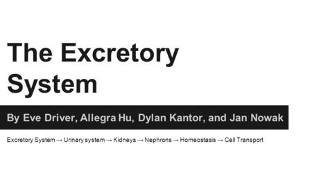 The Excretory System By Eve Driver, Allegra Hu, Dylan Kantor, and Jan Nowak Excretory System → Urinary system → Kidneys → Nephrons → Homeostasis → Cell.