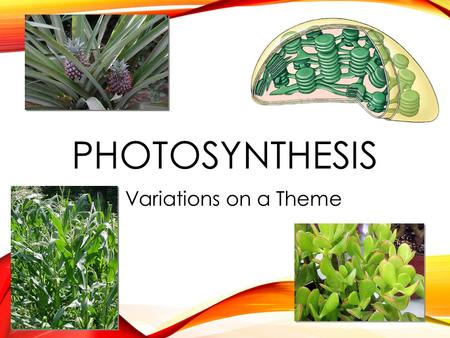 PHOTOSYNTHESIS Variations on a Theme WHAT DO PLANTS NEED? Photosynthesis Light reactions Light H 2 O Calvin cycle CO 2 O O C  sun  ground  air What.