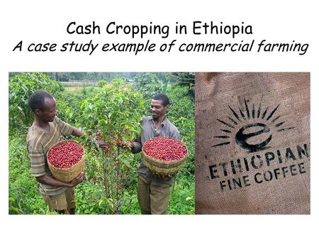 Cash Cropping in Ethiopia A case study example of commercial farming.