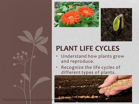 Plant life cycles Understand how plants grow and reproduce.