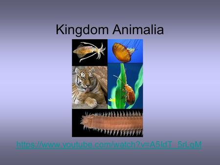 Kingdom Animalia https://www.youtube.com/watch?v=A5IdT_5rLqM.