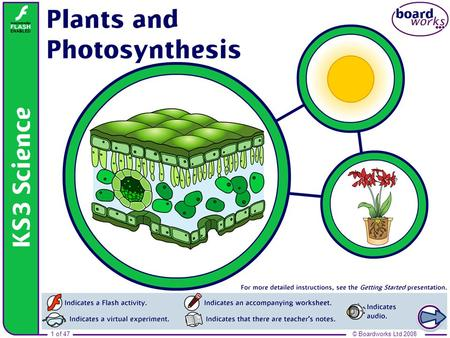 1 of 47© Boardworks Ltd 2008 Plants and photosynthesis.