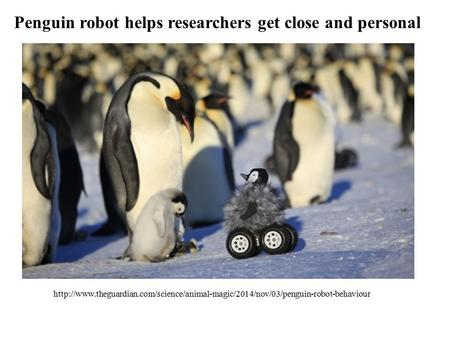 Penguin robot helps researchers get close and personal
