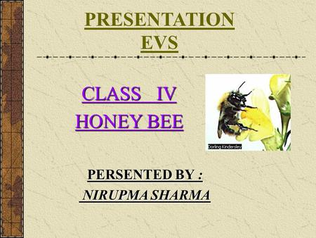 PRESENTATION EVS CLASS IV HONEY BEE PERSENTED BY : NIRUPMA SHARMA.