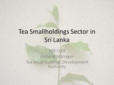 Tea Smallholdings Sector in Sri Lanka MB Cyril General Manager Tea Small holdings Development Authority.
