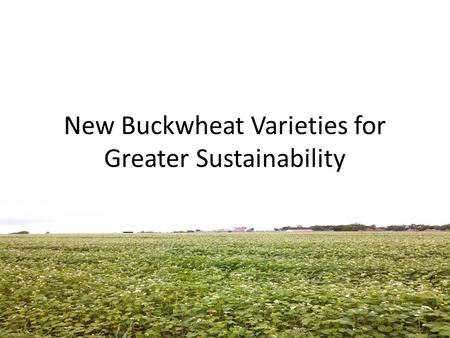 New Buckwheat Varieties for Greater Sustainability.
