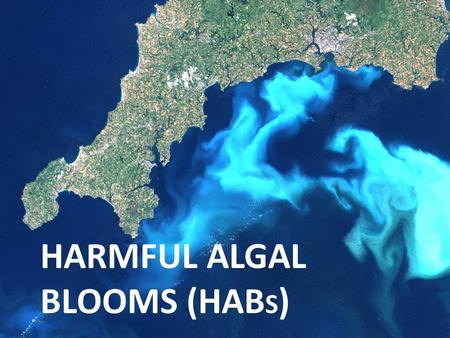 HARMFUL ALGAL BLOOMS (HAB S ). What are Harmful Algal Blooms (HABs)? Harmful algal blooms or HABs are algal blooms composed of phytoplankton known to.
