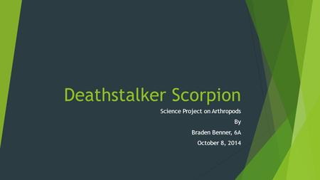 Deathstalker Scorpion Science Project on Arthropods By Braden Benner, 6A October 8, 2014.