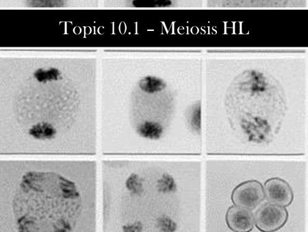 Topic 10.1 – Meiosis HL.