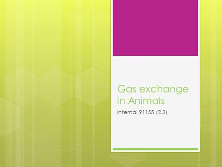Gas exchange in Animals Internal 91155 (2.3). Gas exchange in animals  All animals respire aerobically to release energy needed for cellular processes.