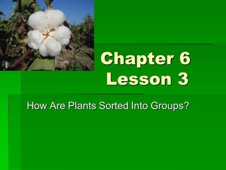 How Are Plants Sorted Into Groups?