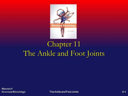 Chapter 11 The Ankle and Foot Joints