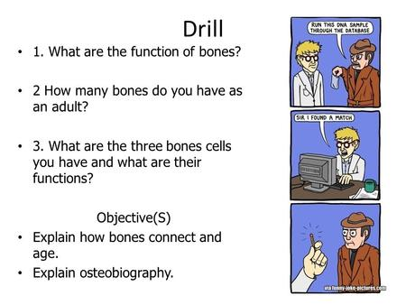 Drill 1. What are the function of bones? 2 How many bones do you have as an adult? 3. What are the three bones cells you have and what are their functions?