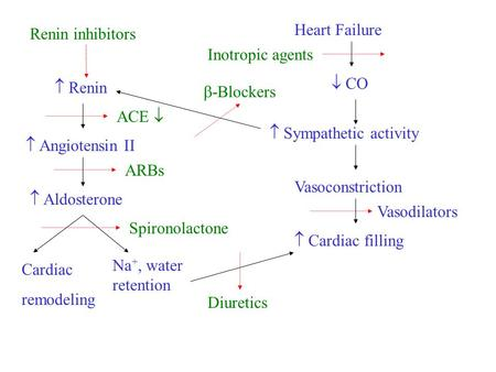 Heart Failure  CO  Sympathetic activity Vasoconstriction  Cardiac filling  Renin  Angiotensin II  Aldosterone Na +, water retention Cardiac remodeling.