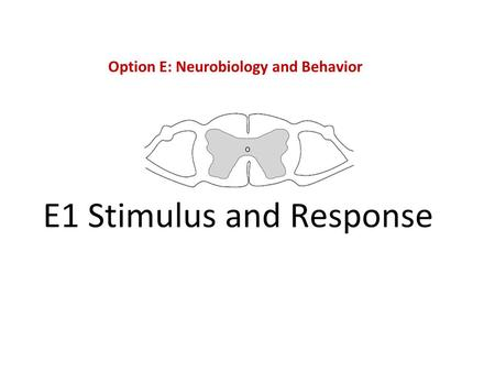 Option E: Neurobiology and Behavior