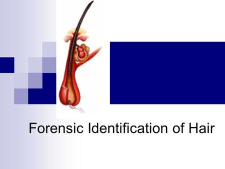 Forensic Identification of Hair