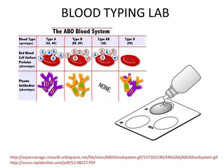 BLOOD TYPING LAB http://supernavage.cmswiki.wikispaces.net/file/view/ABObloodsystem.gif/337102190/440x256/ABObloodsystem.gif http://www.rapidonline.com/pdf/52-0822T.PDF.