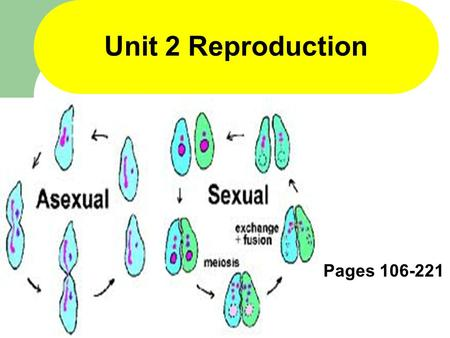1 Unit 2 Reproduction Pages 106-221. 2 Section 4-1 Function of the Nucleus Within the Cell Pages 112-121.