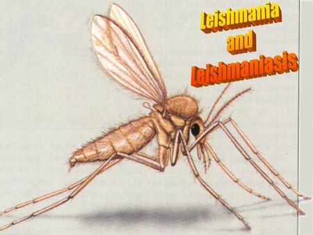 Leishmania and Leishmaniasis.