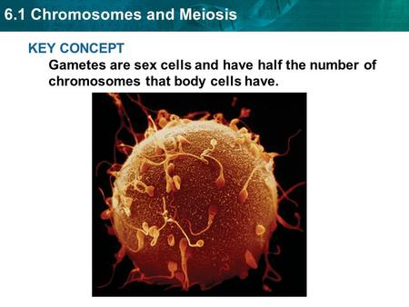 You have body cells and gametes.