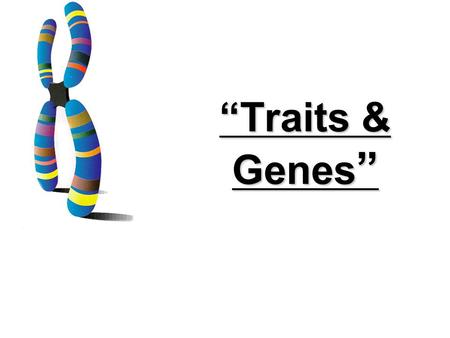 """Traits & Genes "" 6.4 Traits, Genes, and Alleles KEY CONCEPT Genes encode proteins that produce a diverse range of traits."