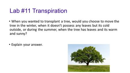 Lab #11 Transpiration When you wanted to transplant a tree, would you choose to move the tree in the winter, when it doesn't possess any leaves but its.
