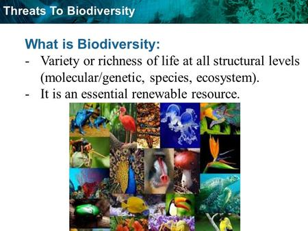 Threats To Biodiversity What is Biodiversity: -Variety or richness of life at all structural levels (molecular/genetic, species, ecosystem). -It is an.